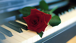 Красная роза на рояле