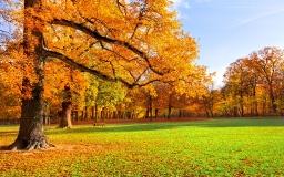 Осенняя лужайка