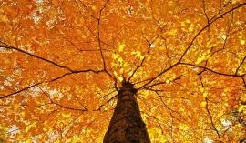 Осенняя крона дерева
