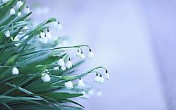 Весенние цветы на сером фоне