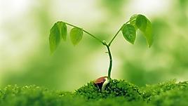 Прорастающее из почвы дерево