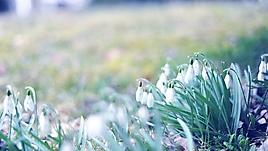 Утренние весенние цветы