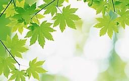 Листья на дереве весной