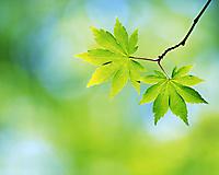 Листики на дереве