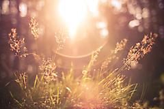 Солнечное утро в лесу