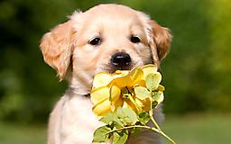 Щенок с цветком