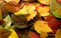 Осенние листья крупным планом