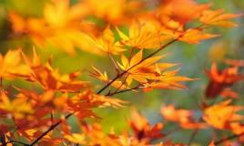 Желтые листья. Осень