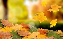 Летящие осенние листья