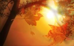 Осенние листья на закате