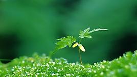 Начало роста, темный зеленый фон