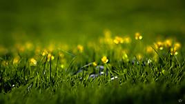 Весенние цветочки, зеленый фон