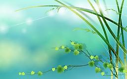 Зеленые цветы тянутся к солнцу