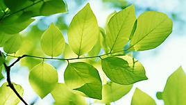 Весенние листья на солнышке