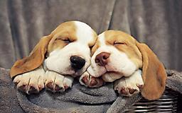 Дружные собаки