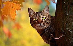 Кот в осеннем лесу