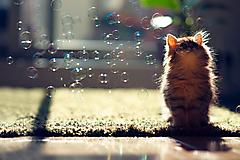 Котенок и мыльные пузыри